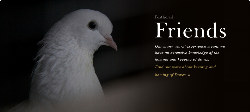 We have an extensive knowledge of the homing and keeping of doves.